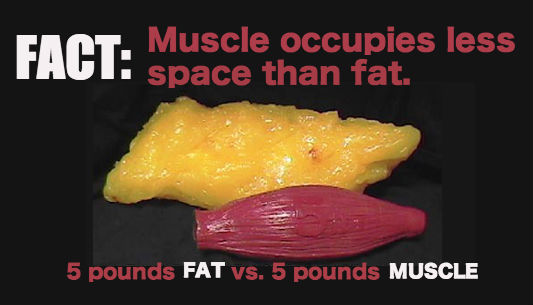 fat-VS-muscle-1
